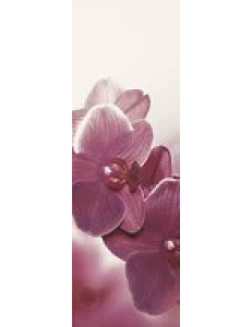 Abrila INSERTO Kwiat В 20 х 60