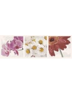 Briosa INSERTO Flora A 20 x 60