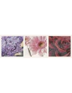 Briosa INSERTO Flora B 20 x 60