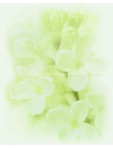 Cersanit Andrea Decor Flower 25 x 40