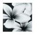 Плитка Flower Grey Composition 75X75