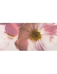 Stone rose inserto flower B 29,7X60